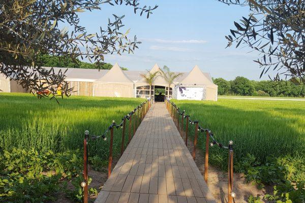 ingang asperges in het veld